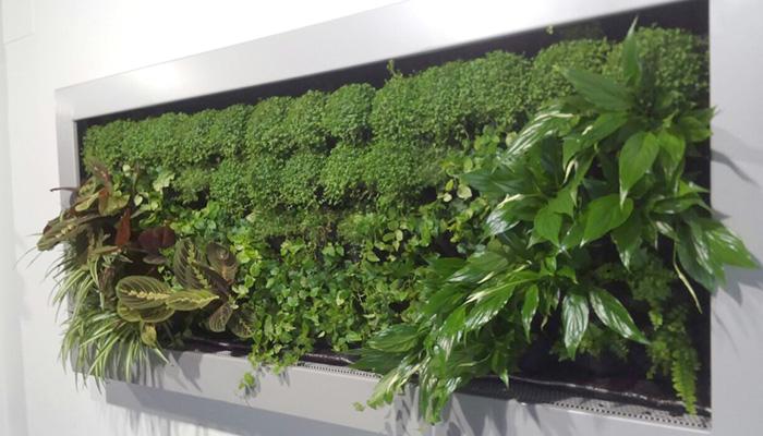 jardines-verticales-de-interior